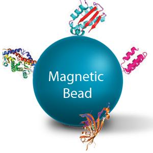 magnetic bead.jpg